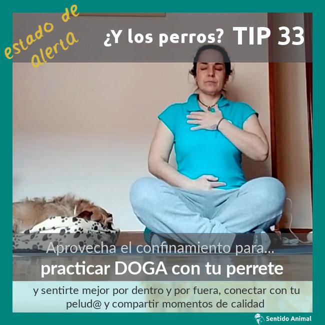 TIP 33 – practicar Doga con tu perrete – estado de alerta