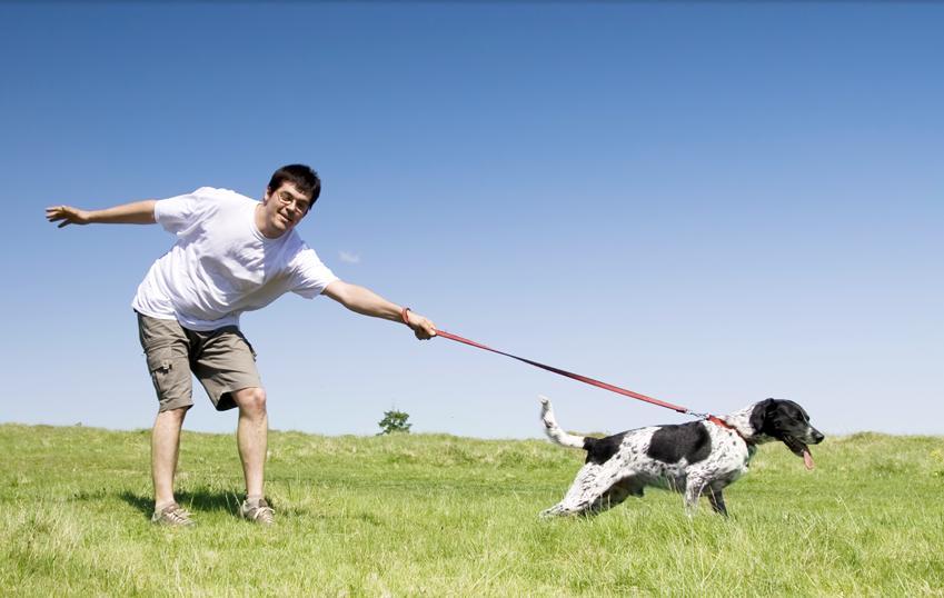 ¡Ayuda! Mi perro tira de la correa durante el paseo