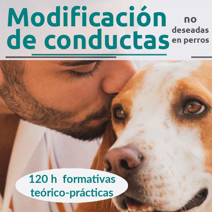 Curso-profesional_modificación de conductas a perros