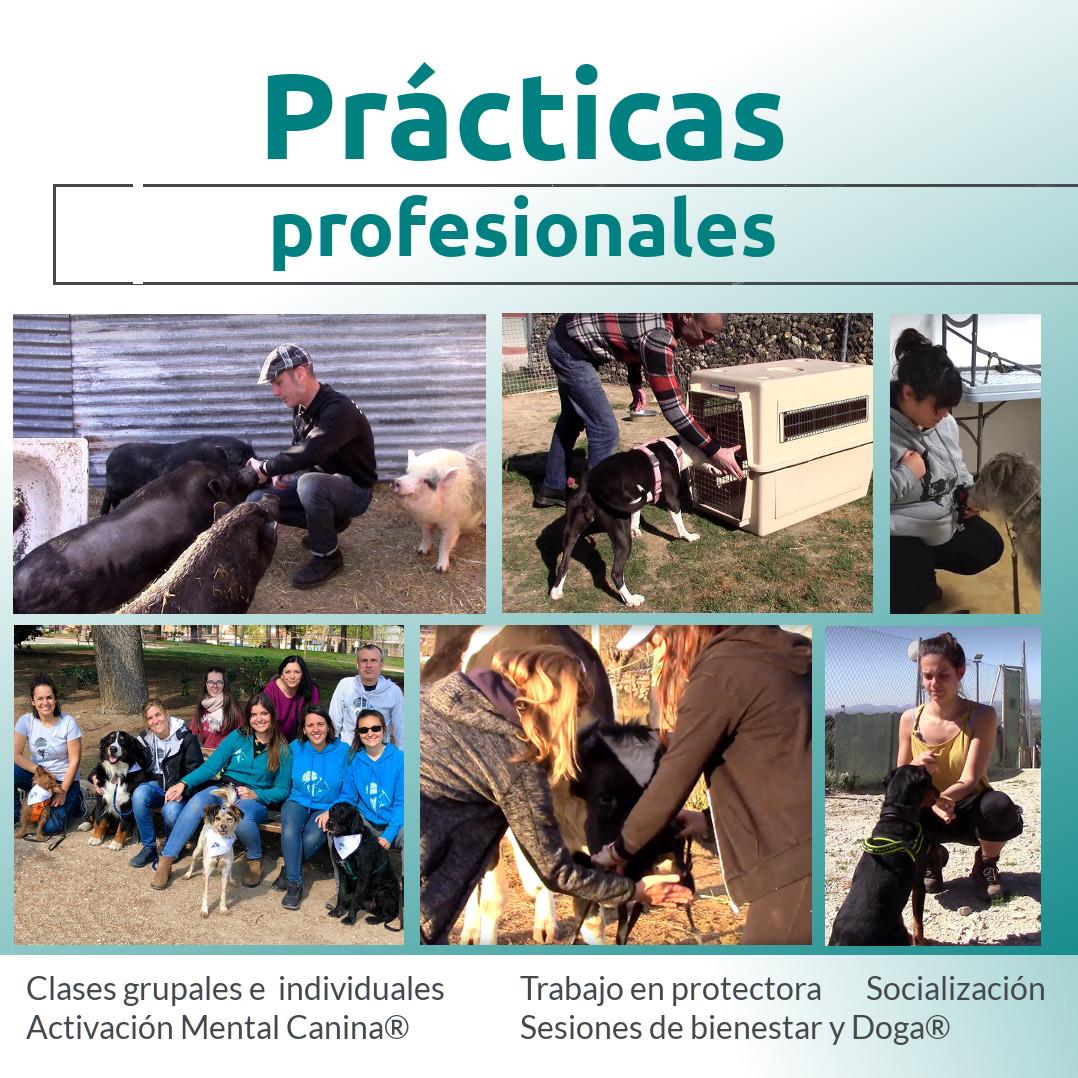 Prácticas profesionales de adiestramiento canino en Madrid