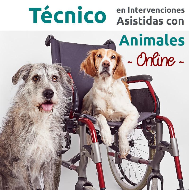 ONLINE – Curso profesional de Técnico/a en Intervenciones Asistidas con Animales – sep20