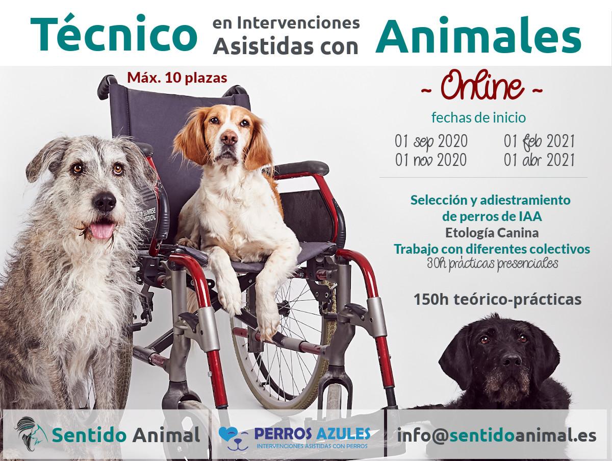 Técnico en Intervenciones Asistidas con Animales - Online