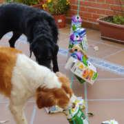 trenecito-canino juguete cognitivo para perros