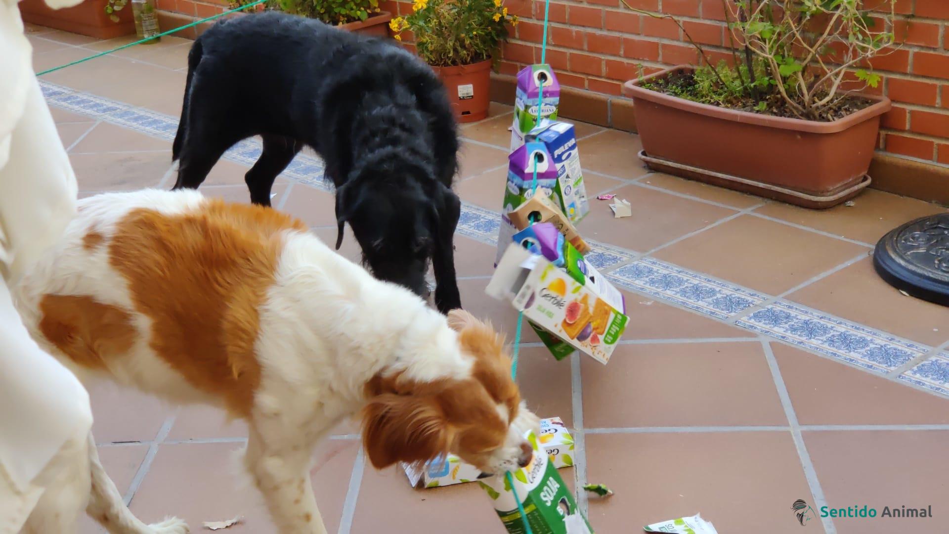 Jugando con los peludos: trenecito canino