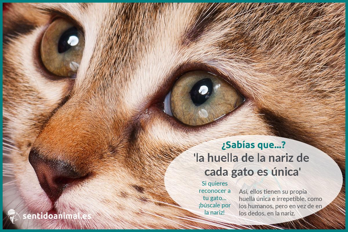 ¿Sabías que la huella de la nariz de tu gato es única?