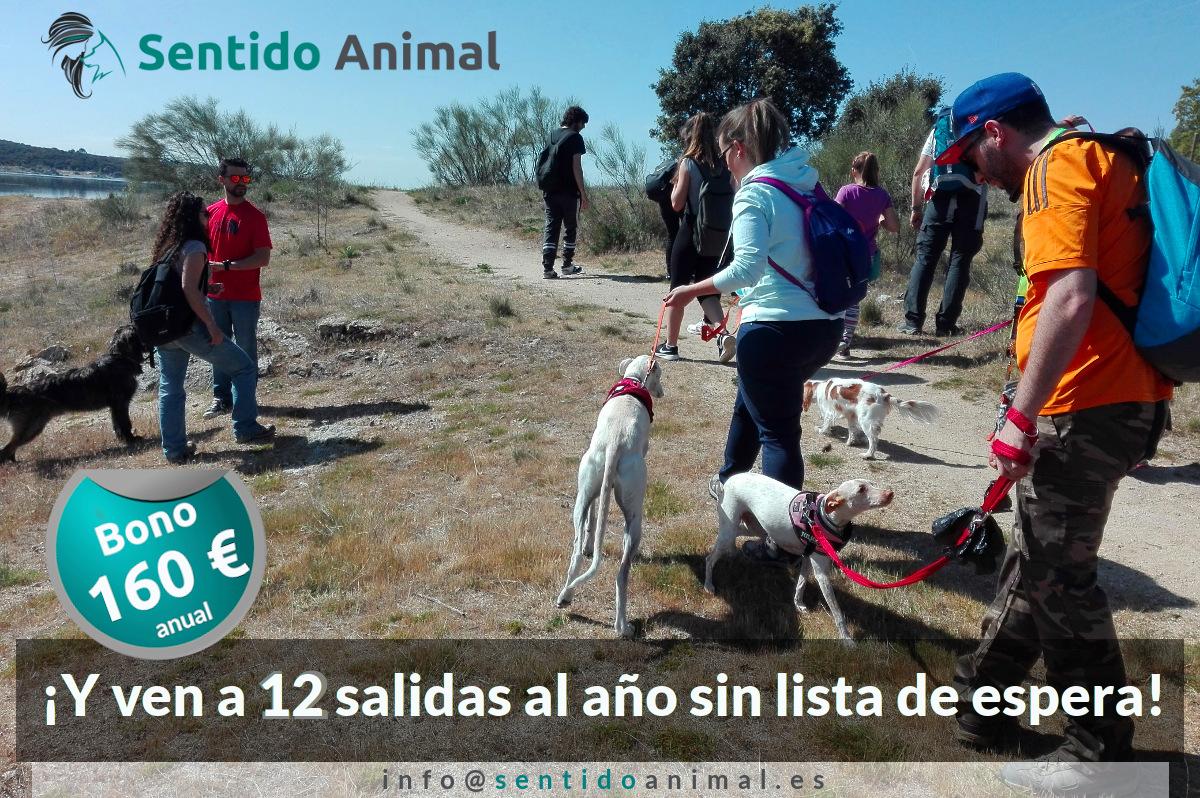 Bono anual de salidas de socialización canina