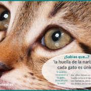 nariz del gato - huella única