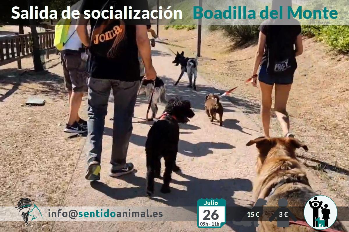 Socialización canina y paseo – 26 julio 2020