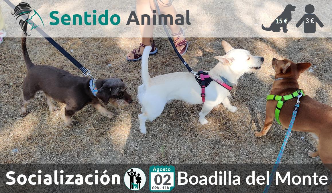 Socialización canina y paseo – 02 agosto 2020