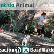 Salida de socialización canina - Boadilla del Monte - Madrid