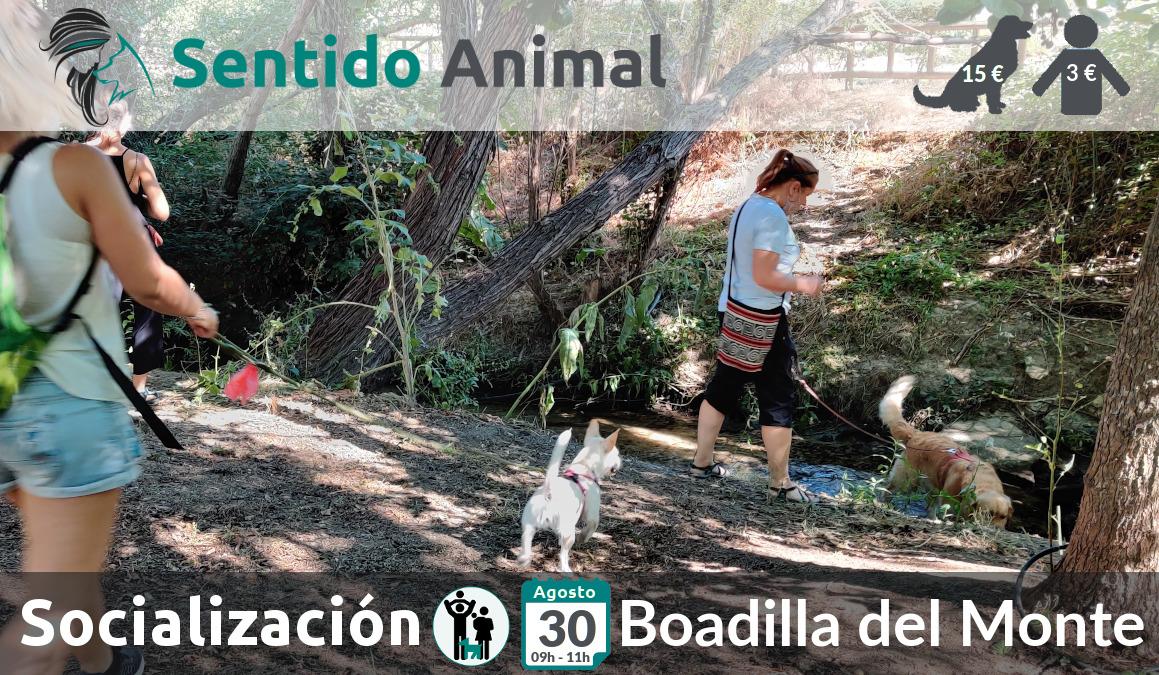 Socialización canina y paseo – 30 agosto 2020