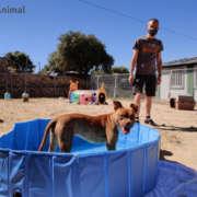 Perro dentro de la piscina