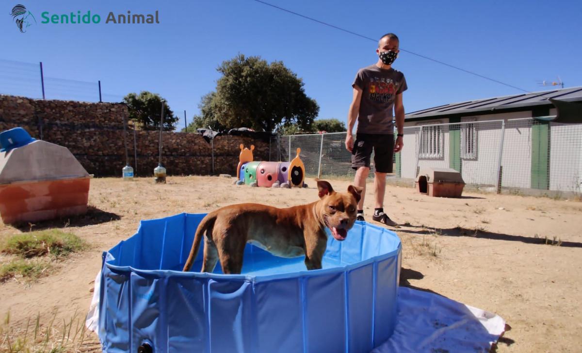 Cómo meter a un perro en la piscina