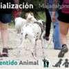 Socialización Canina en Majadahonda - Madrid