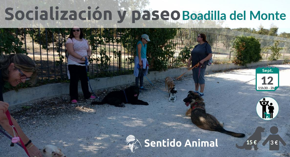 Socialización canina y paseo – sábado septiembre 2020