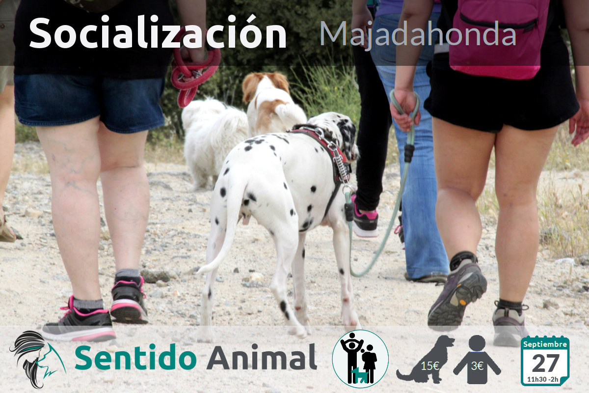 Socialización canina y paseo – domingo septiembre 2020