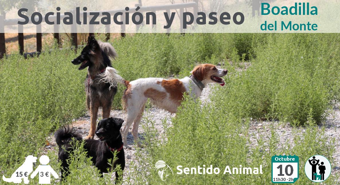 Socialización canina y paseo – sábado octubre 2020