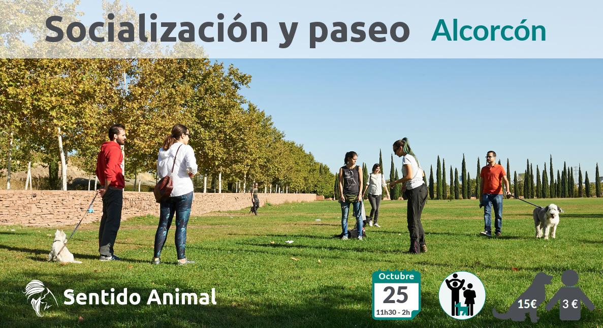Socialización canina y paseo – domingo octubre 2020