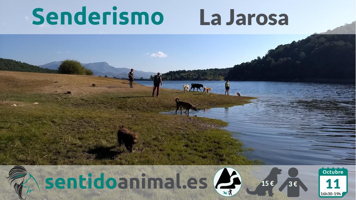 Senderismo con perros en Guadarrama - Madrid