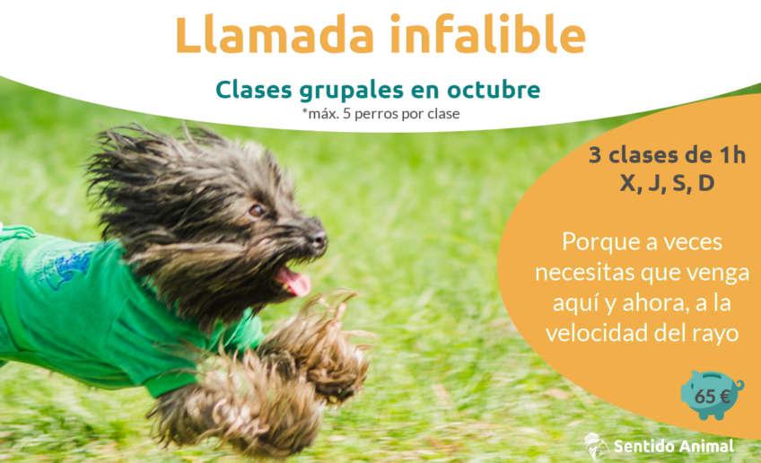 Llamada infalible oct2020 clase grupal de adiestramiento canino