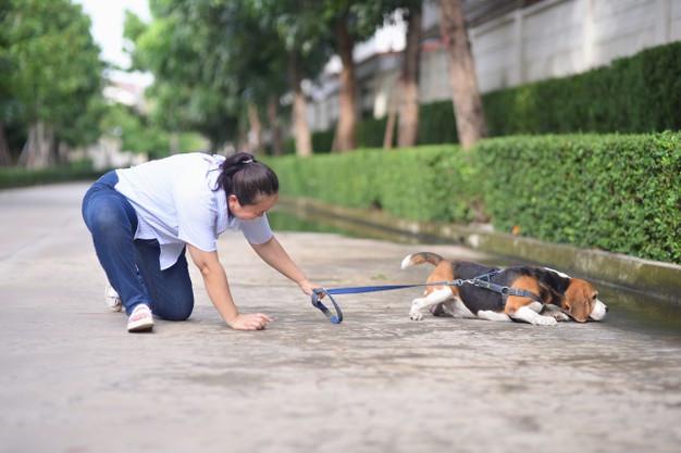 ¿Permisividad extrema? Flaco favor a tu perro
