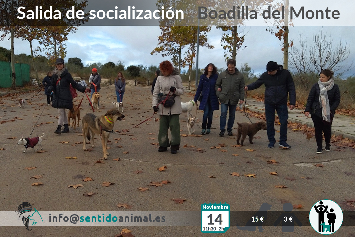 Socialización canina y paseo – sábado noviembre 2020