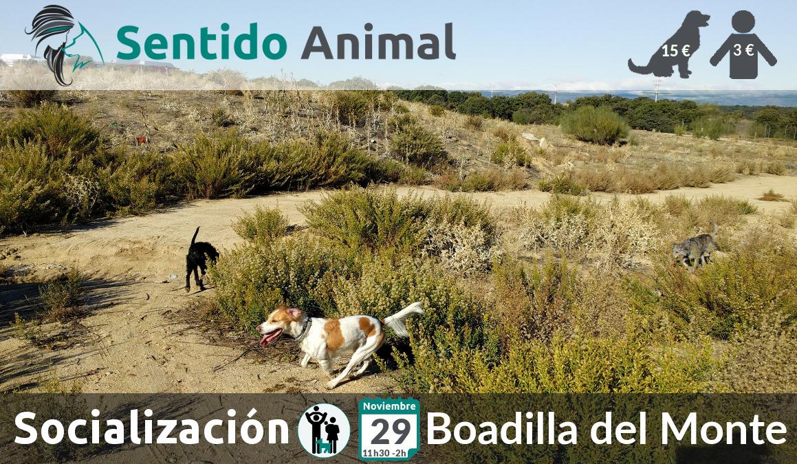 Socialización canina y paseo – domingo noviembre 2020