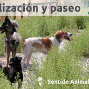 Socialización canina en Boadilla del Monte