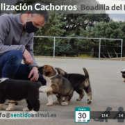Socialización de cachorros en Boadilla del Monte