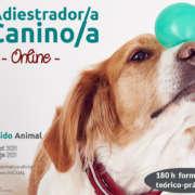 Curso online de Adiestrador Canino