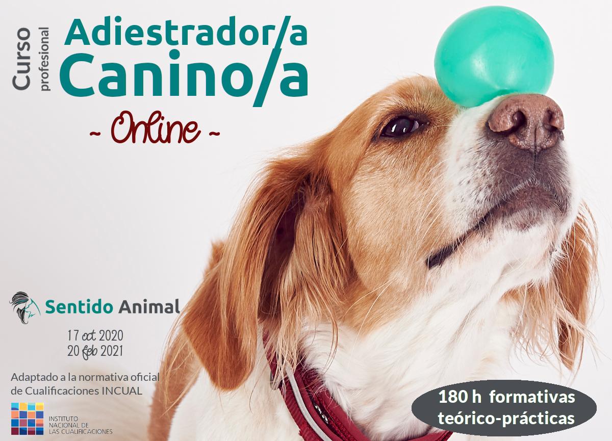 Curso online profesional de Adiestrador/a canino/a