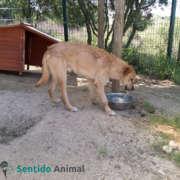 Perro abandonado en la protectora