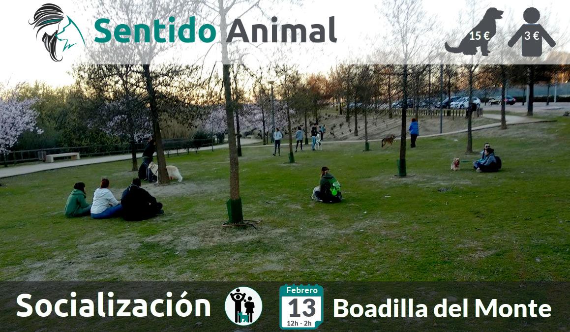 Socialización canina y paseo – sábado febrero 2021