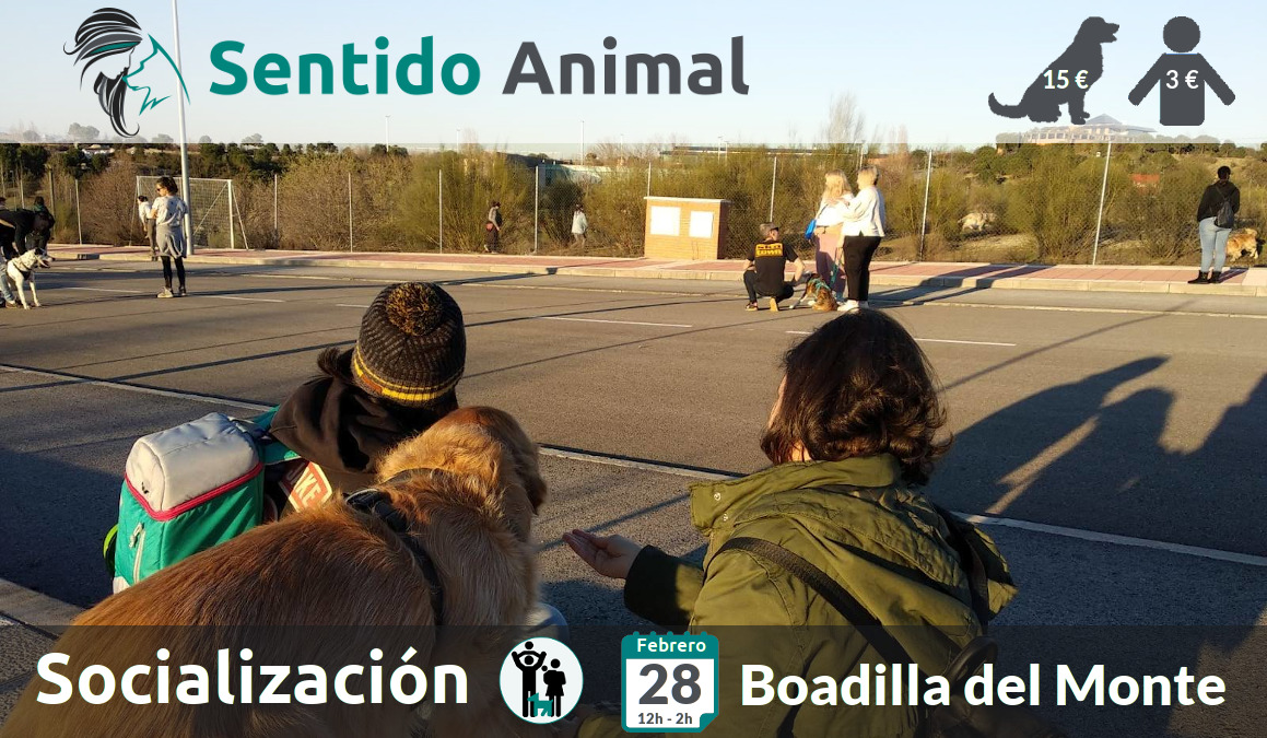 Socialización canina y paseo – domingo febrero 2021