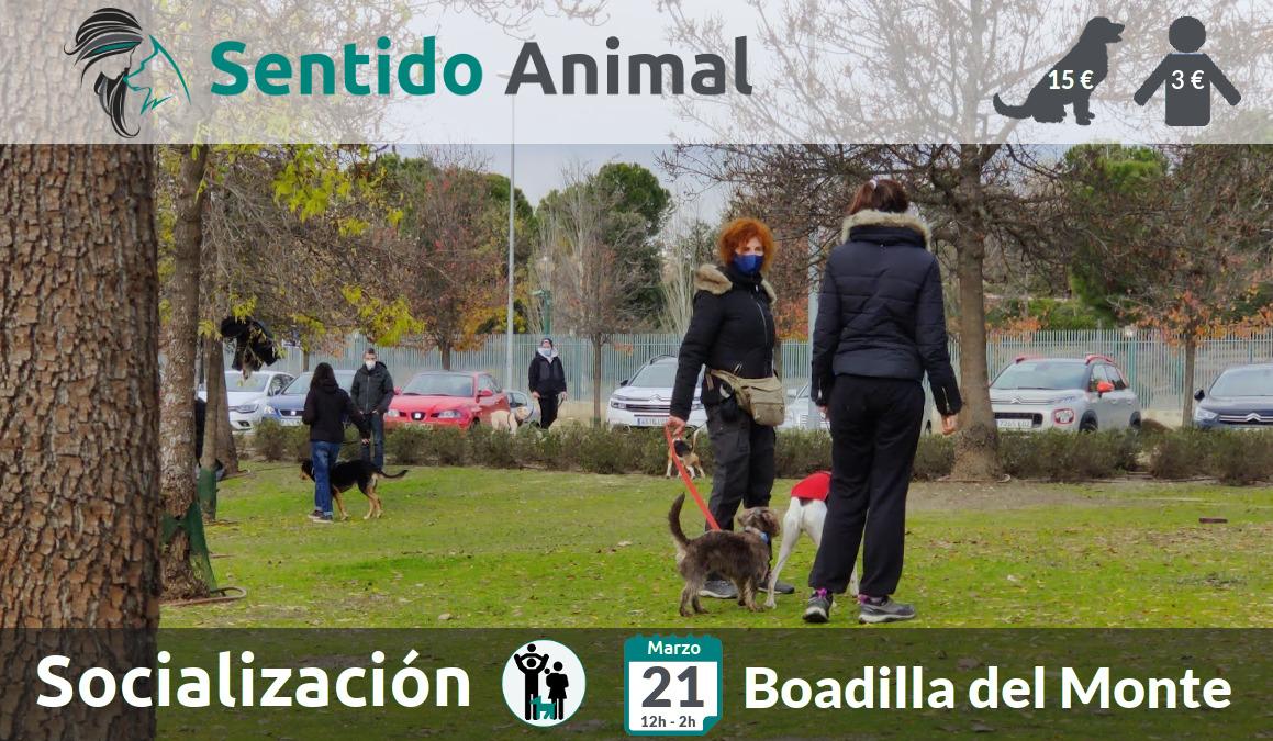 Socialización canina y paseo – domingo marzo 2021