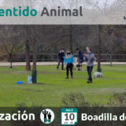 Socialización canina - Boadilla del Monte