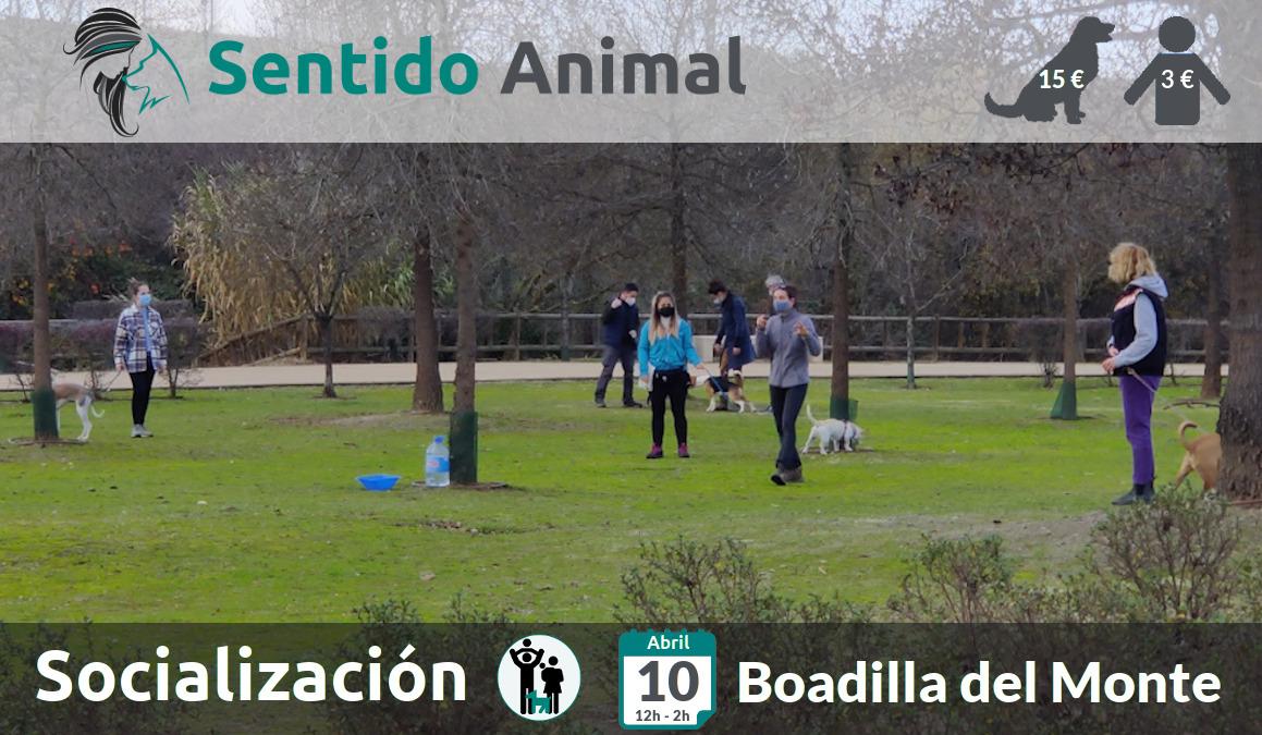Socialización canina y paseo – sábado abril 2021