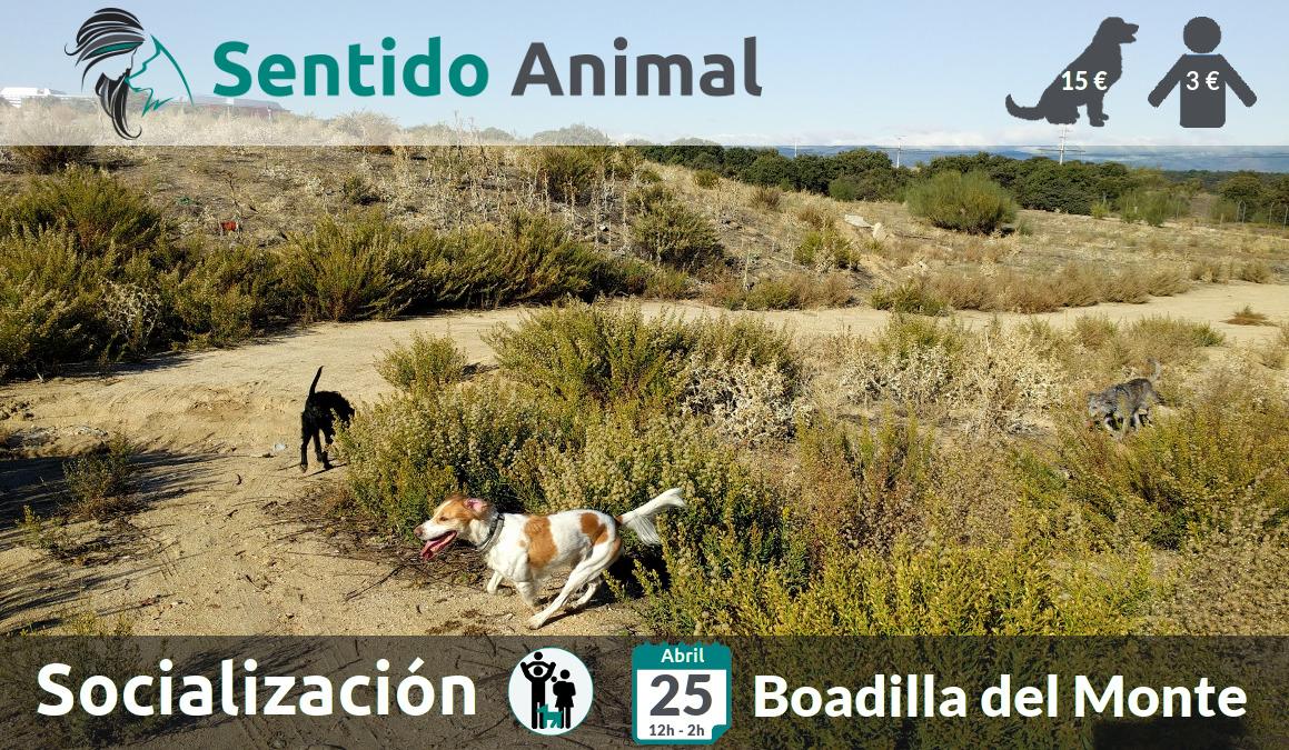 Socialización canina y paseo – domingo abril 2021