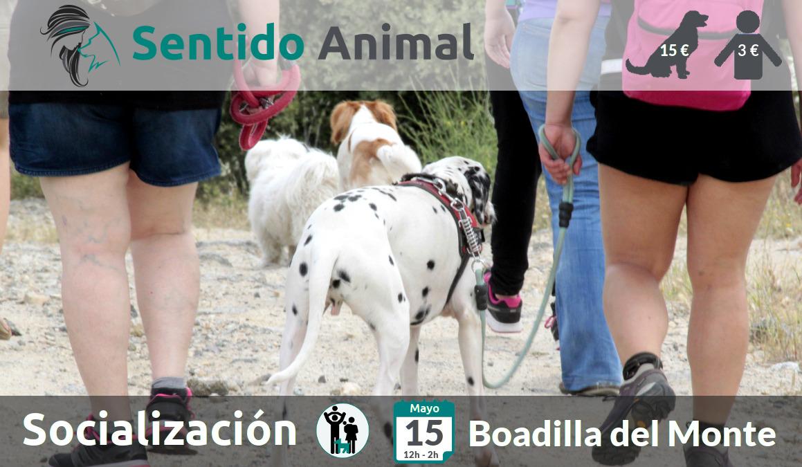 Socialización canina y paseo – sábado mayo 2021