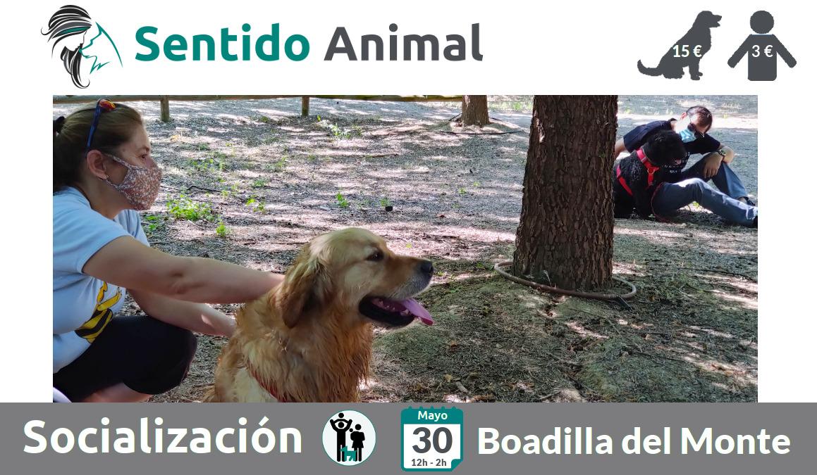 Socialización canina y paseo – domingo mayo 2021