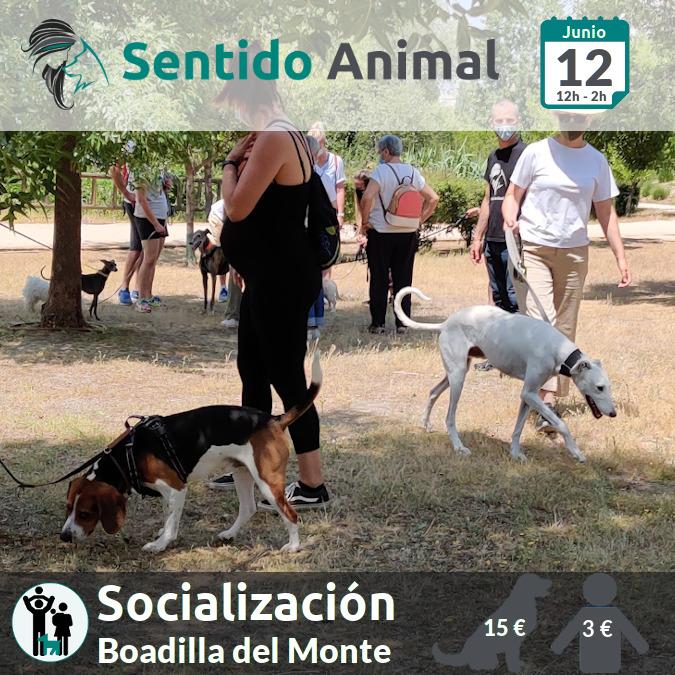Socialización canina y paseo – sábado junio 2021