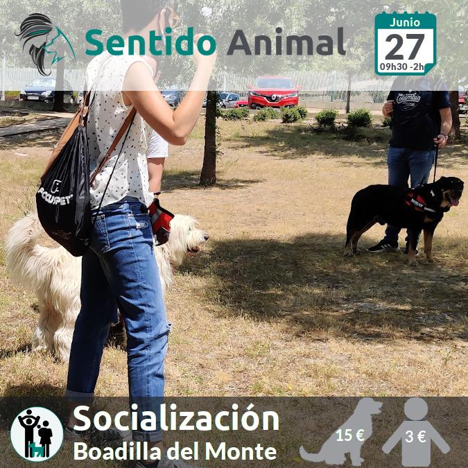 Socialización canina y paseo – domingo junio 2021