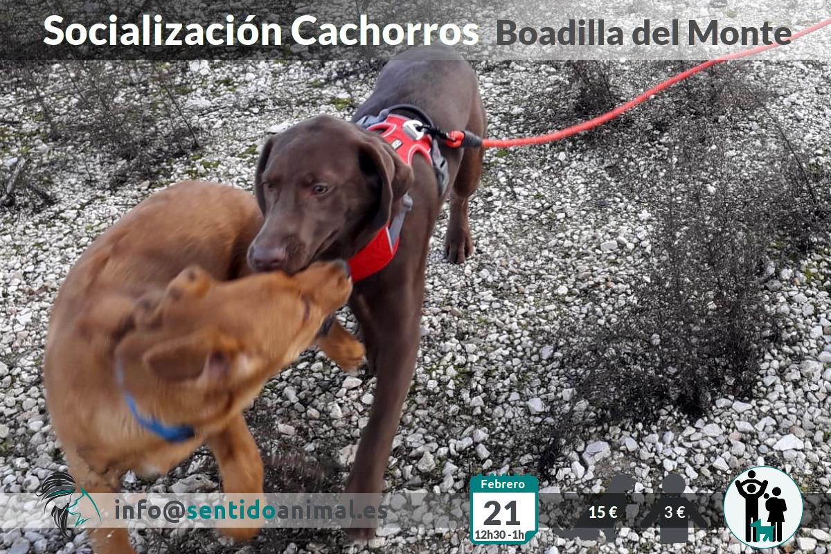 Socialización cachorros – feb21