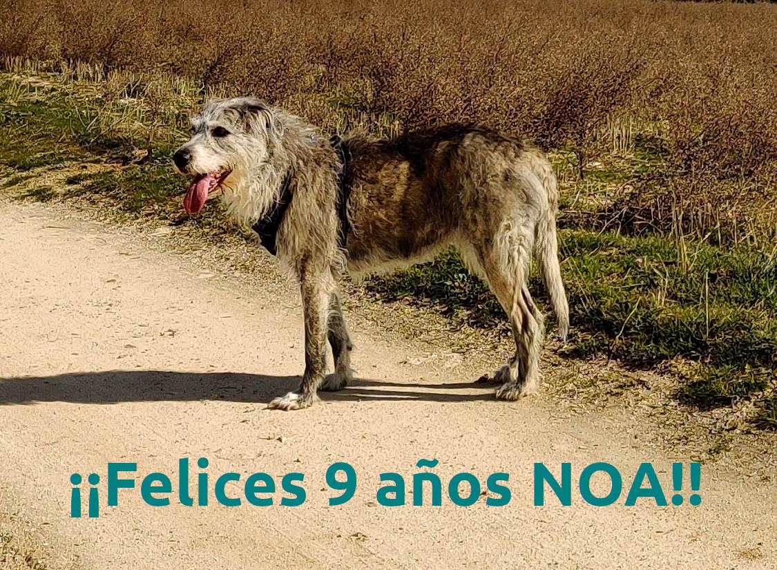 ¡Felices 9 años, Noa!