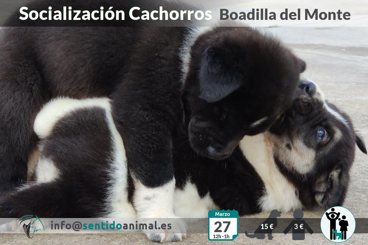 Socialización cachorros -mar21