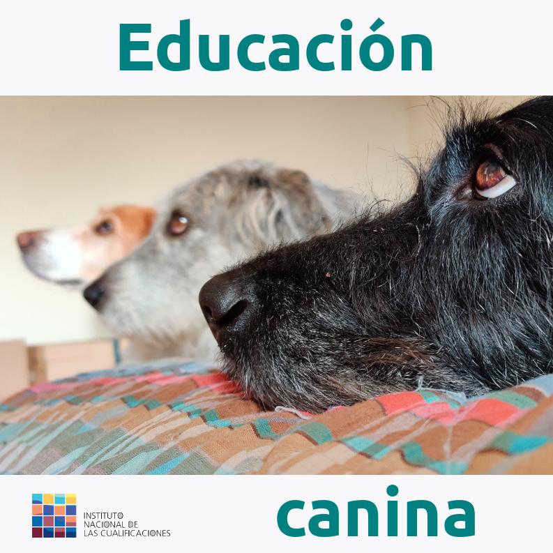 Formacion-online_Educación-canina