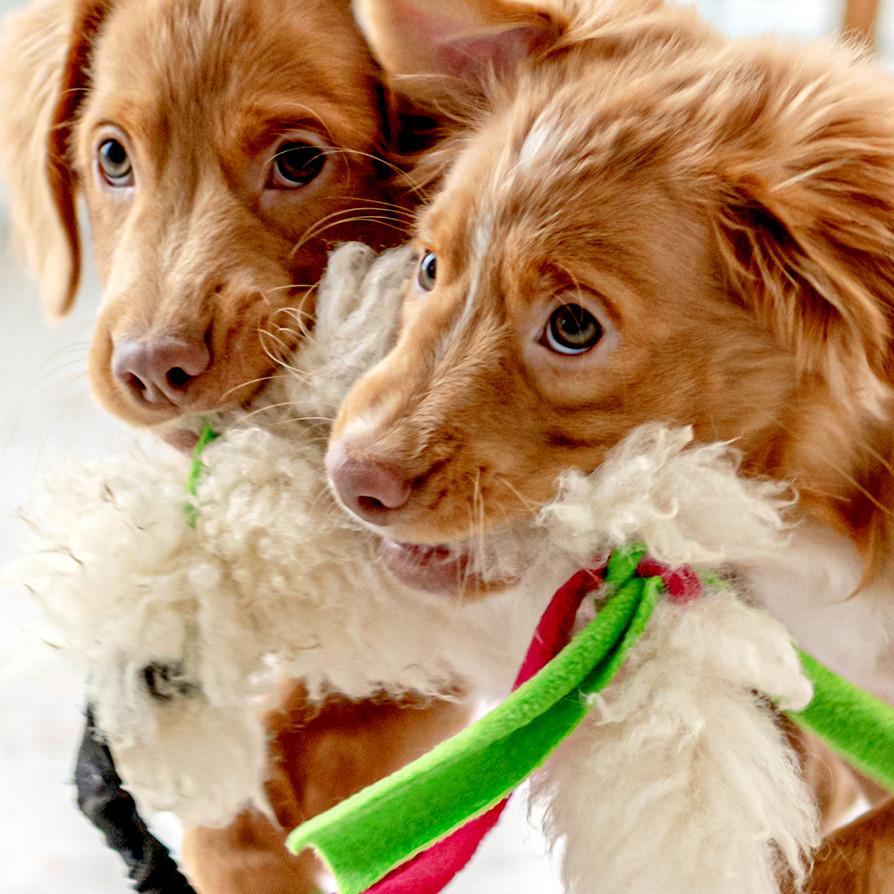 cachorros con juguetes