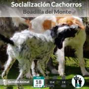 Salida de socialización de cachorros - Boadilla del Monte
