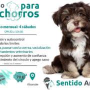 clases para Cachorros de educación canina