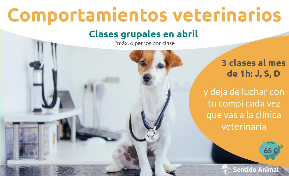 comportamientos veterinarios